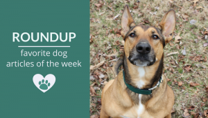 Roundup 105: Favorite Dog Articles & Videos of the Week