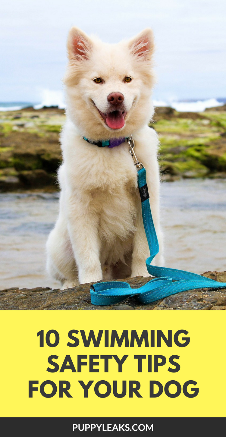 10 Water Safety Tips For Your Dog. How to keep your dog safe in the water.