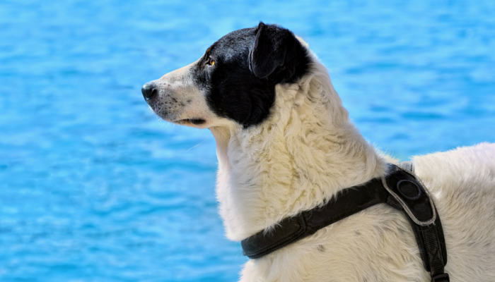 10 Swimming Safety Tips For Your Dog