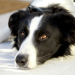 Why I Don't Like Seeing The Word Guaranteed in Dog Training Articles