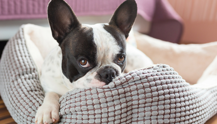 3 Signs Your Dog Is Bored (And What to Do About It)