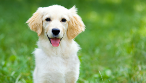 15 Things No One Tells You Before Getting a Dog.