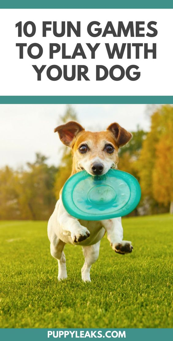 Looking for some simple ways to keep your dog fit and active? Here's 10 fun games to play with your dog.