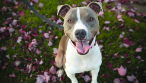 New Delaware Bill Prohibits Breed Specific Legislation