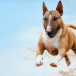 5 Quick Ways to Tire Out Your Dog