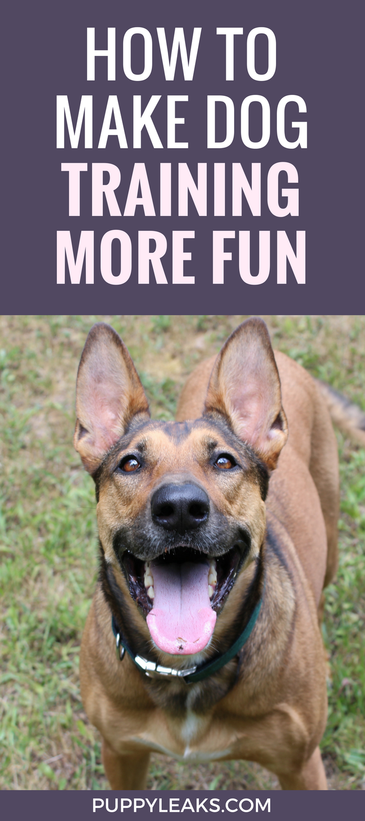 How to Make Dog Training Fun By Switching Up The Rewards
