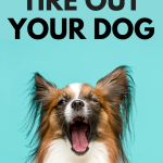How to Tire Out Your Dog