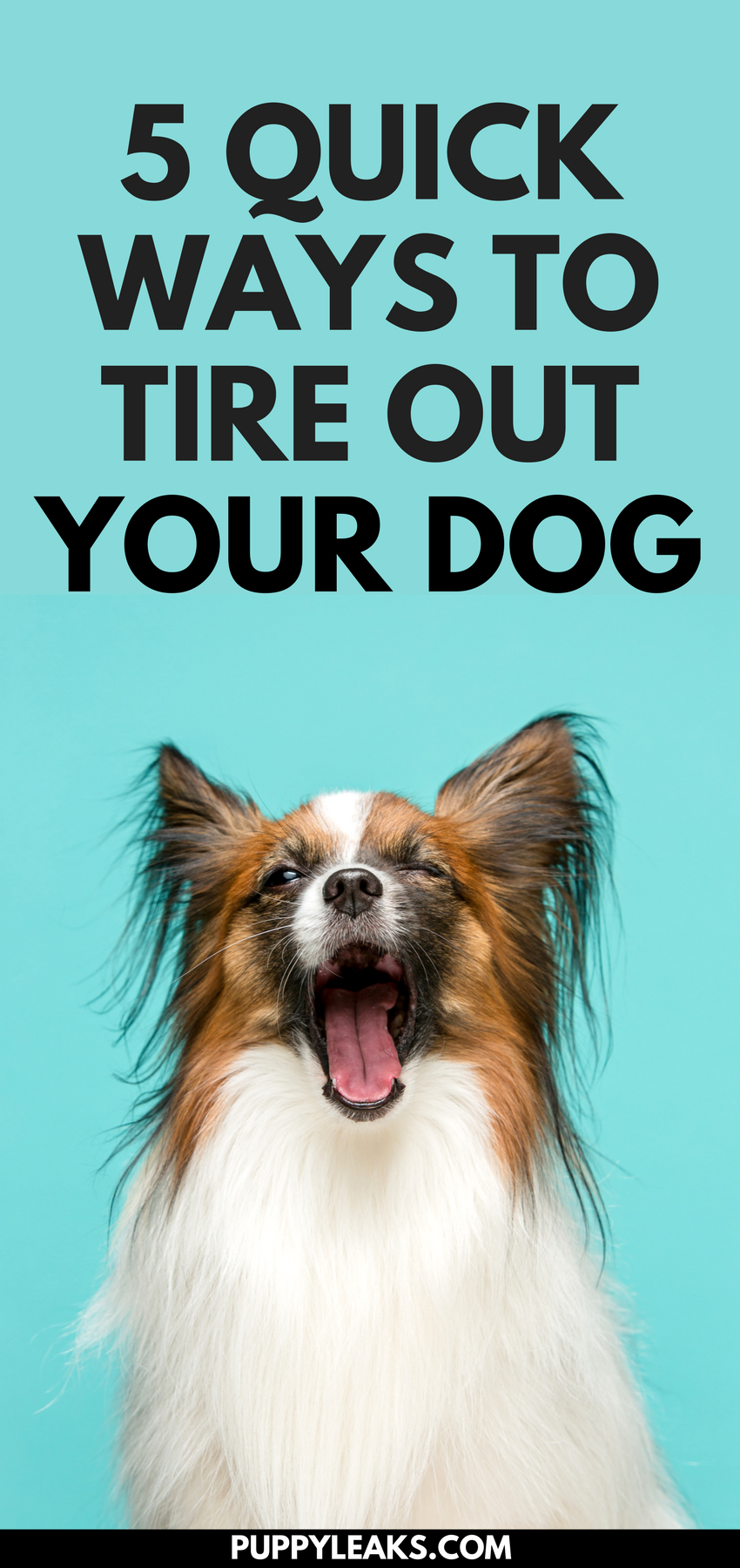 5 quick ways to tire out your dog puppy leaks does your dog have a lot of energy looking for some easy ways to exercise solutioingenieria Images