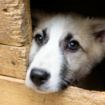 Terms Associated With Animal Shelters, Rescues & Adoptions