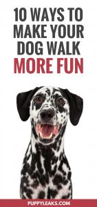 10 Ways to Make Your Dog Walk More Fun