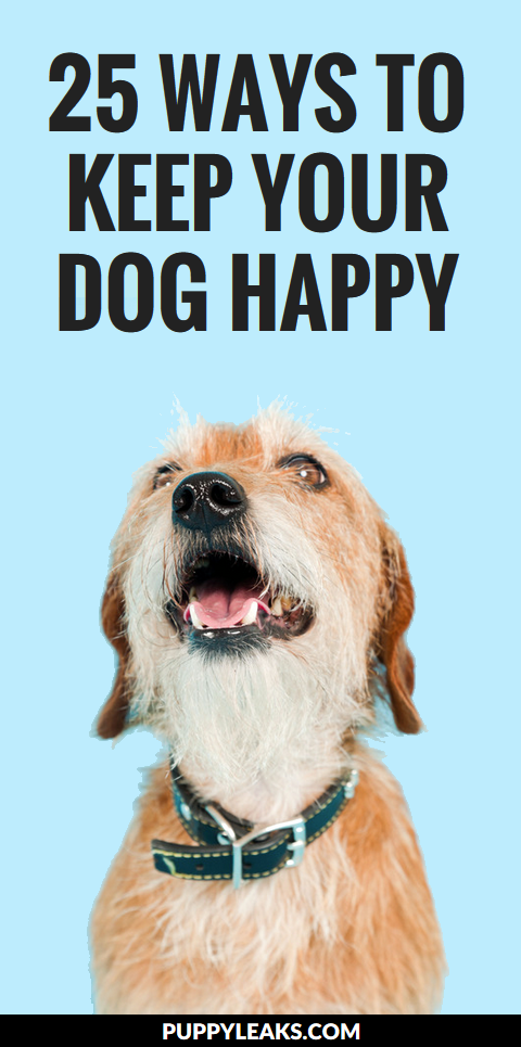 25 Ways to Keep Your Dog Happy