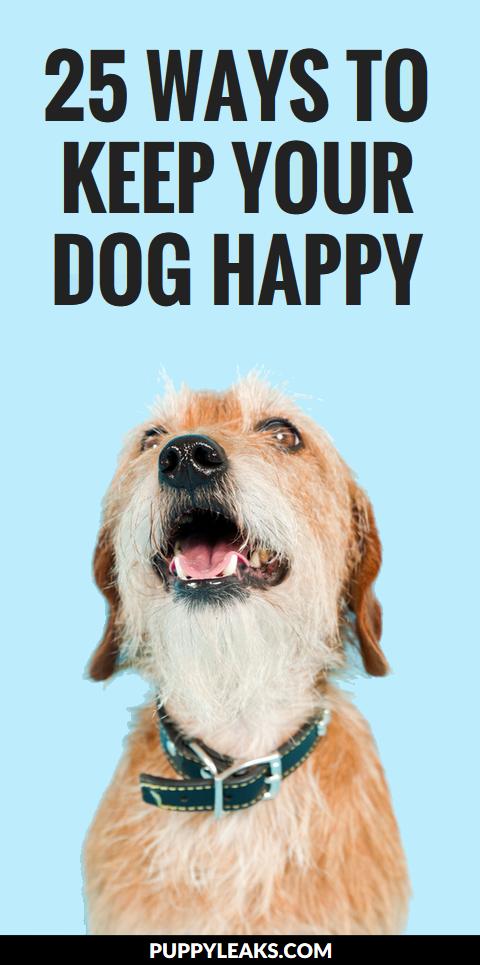 25 Ways to Keep Your Dog Happy