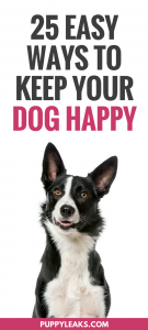 25 Easy Ways to Keep Your Dog Happy