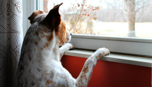 5 Tips for Managing Canine Separation Anxiety