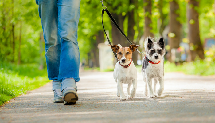 10 Ways to Make Your Dog Walk More Fun