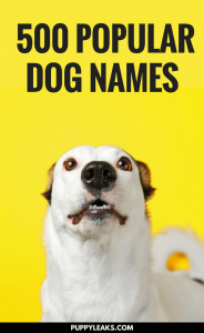500 Of The Most Popular Dog Names
