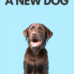 How to bond with a new dog