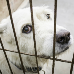 Want California To Ban The Sale of Puppy Mill Dogs in Pet Stores? Now's The Time To Show Your Support