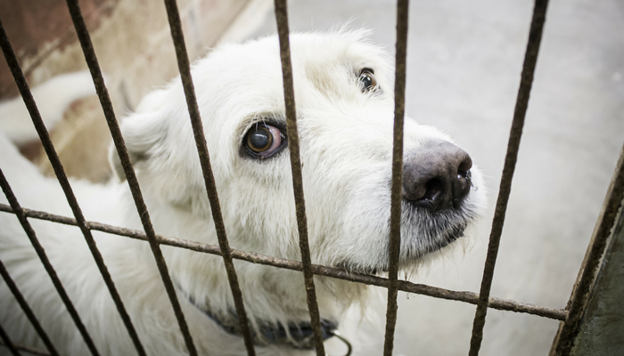 California May Ban The Sale of Puppy Mill Dogs in Pet Stores