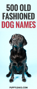 500 Old Fashioned Dog Names