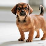 10 Tips That Make Dog Training Easier