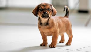 Tips to Make Dog Training Easier