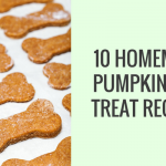 10 Homemade Dog Treat Recipes Made With Pumpkin