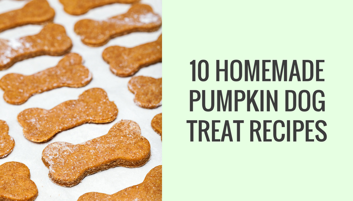 06492a29d83e 10 Homemade Dog Treat Recipes Made With Pumpkin - Puppy Leaks