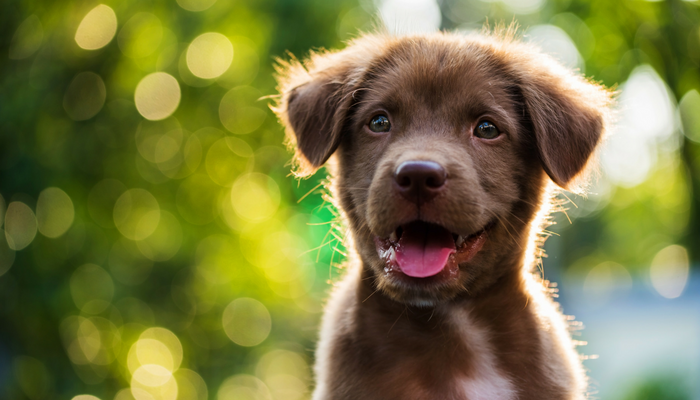 10 Ways to Bond With Your New Dog