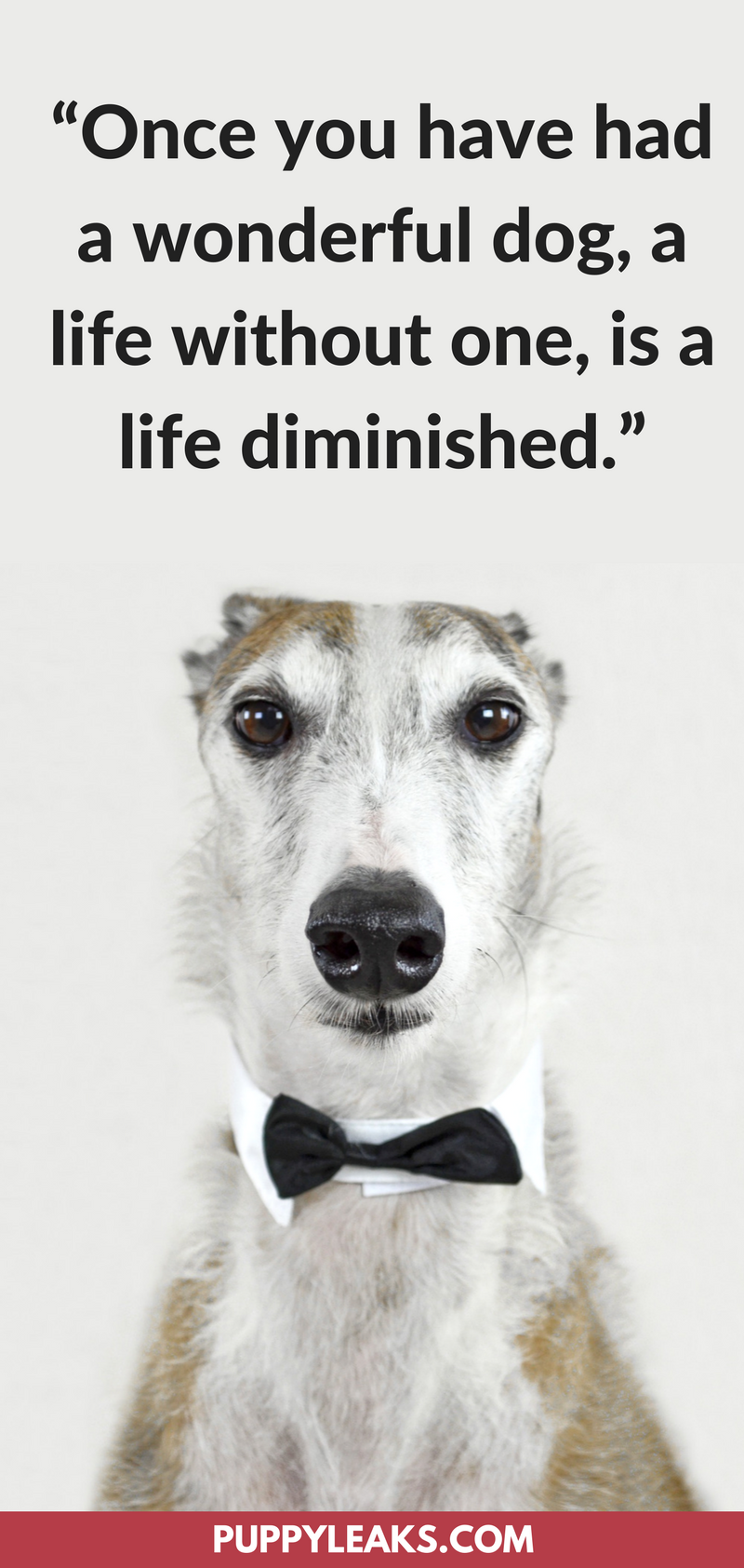 75 Of The Best Dog Inspired Quotes
