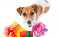 20 Fun Christmas Gift Ideas For Your Dog