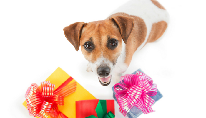 20 Fun Christmas Gift Ideas For Your Dog - Puppy Leaks