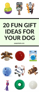 20 Fun Gift Ideas For Your Dog