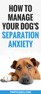 How to manage your dog's separation anxiety