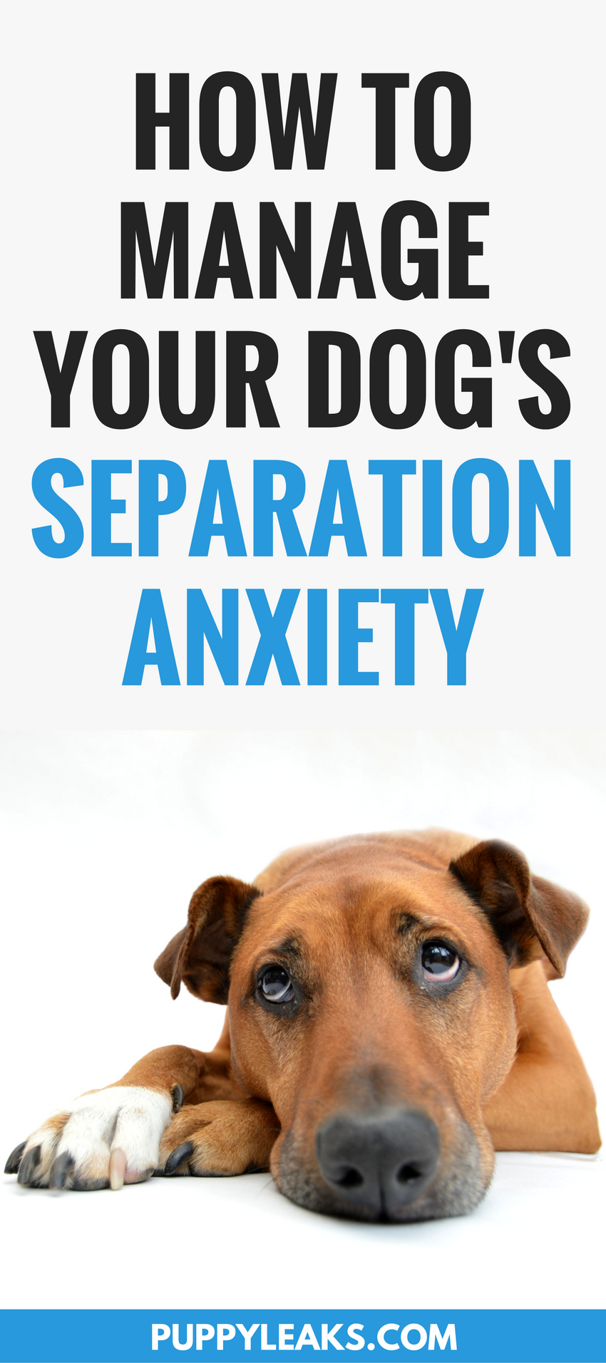 Does your dog panic when you leave? If so they're probably suffering from canine separation anxiety. Here's 5 tips for managing your dog's separation anxiety, including how to keep your dog calm when you're leaving and how to encourage your dog to be more independent. #dogs #dogtraining #dogadvice #dogtips