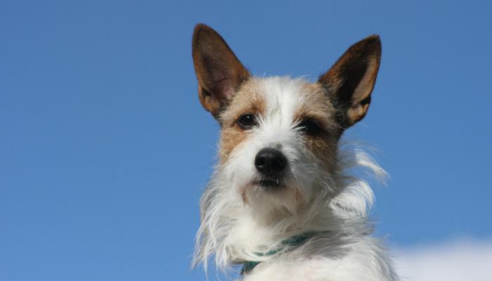 10 conseils qui facilitent la formation de chien