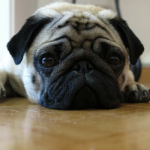 3 Reasons Why Fleas Are So Hard To Get Rid Of