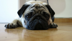 Why Fleas Are So Hard to Get Rid Of