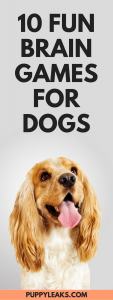 10 Fun Brain Games For Your Dog