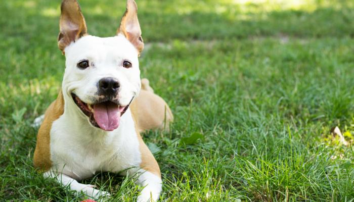 Nourrir votre chien moins peut augmenter sa durée de vie