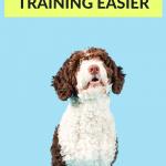 How to make dog training easier