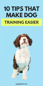 How to make dog training easier