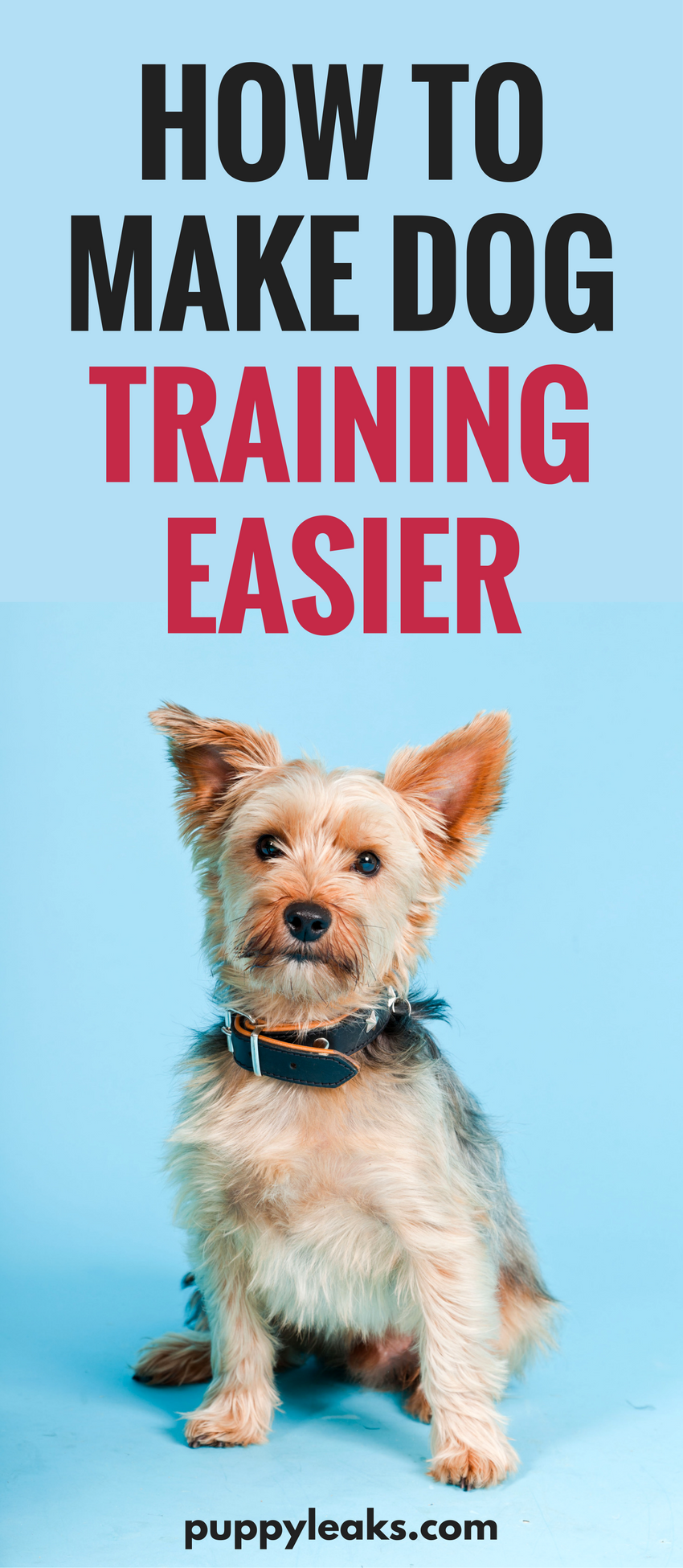 10 Tips to Make Dog Training Easier
