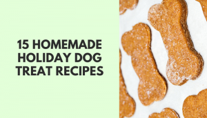 15 Homemade Holiday Dog Treat Recipes