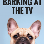 How to Stop Your Dog From Barking at the TV