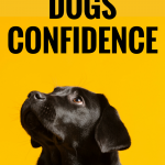 Is your dog shy and fearful around new people and in new situations? You can help by working on some confidence building exercises. Here's 5 ways to boost your dog's confidence. #dogs #dogtraining #dogtips #dogcare #dogadvice