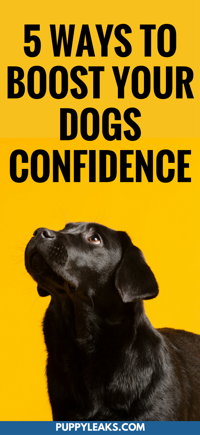 Is your dog shy and fearful around new people? Do they get scared in new situations. By working on some basic obedience work you can help boost your dogs confidence in new situations. Here's 5 ways to boost your dog's confidence. #dogs #dogtips #dogcare #dogtraining #dogadvice #puppies #puppy #puppytraining #puppytips