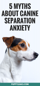 5 Misconceptions About Canine Separation Axniety