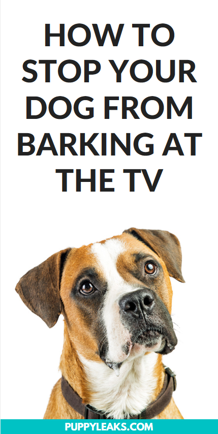 How to stop your dog from baking at the TV