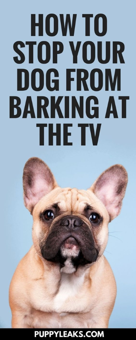 How I Stopped My Dog From Barking at the TV - Puppy Leaks